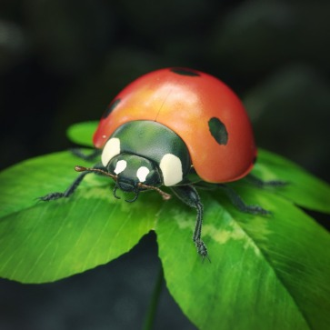 Coccinelle_HD_Comp01