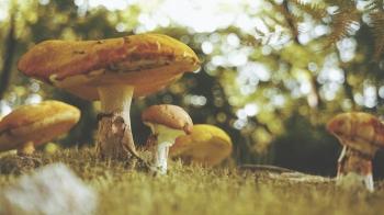 HD_Mushroom01